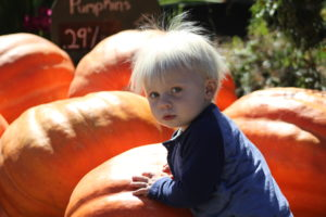 Finn's Pumpkins Photo by Sherri Woodbridge